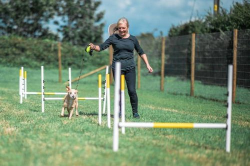 a trainer and her dog using the agility equipment at the Frog and Dog