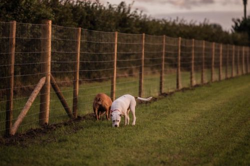 two dogs playing in the field near the fencing