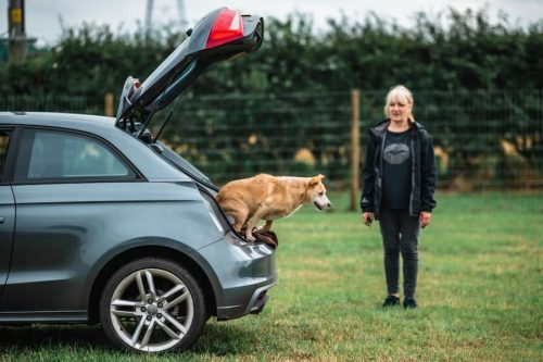 a dog jumping out of the car in the field